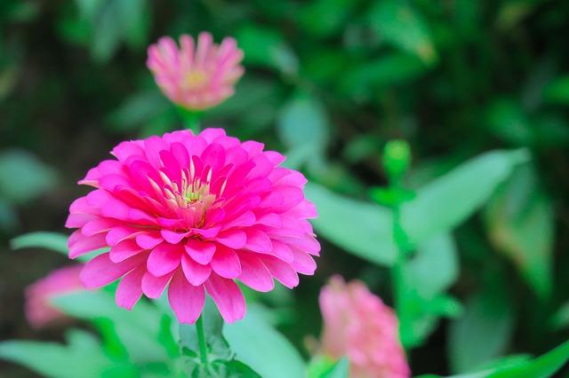 plante traitement alzheimer